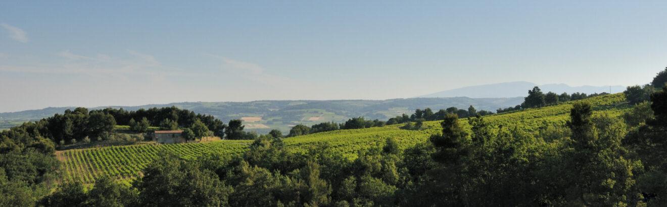 Domaine Roche-Audran, vignoble de Buisson en biodynamie